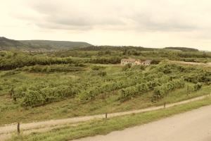 Weinbeisserei Porcella, Bio, Fleischraritäten, porcella.at