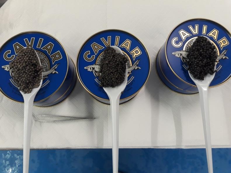 Caviar (28)